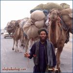 Nomad Caravan, Kabul