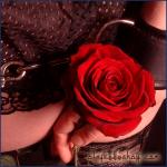 Handcuffed Rose.